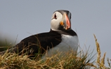 Annual seabird count takes place off Cape Wrath