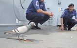 Warship hosts flying visit from feathered friends